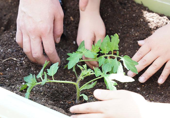 野菜の生長