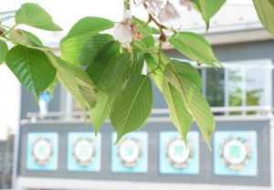 花の日礼拝・訪問